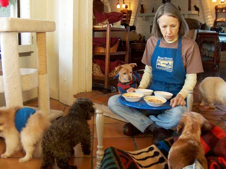 Dinner time for dogs of BrightHaven