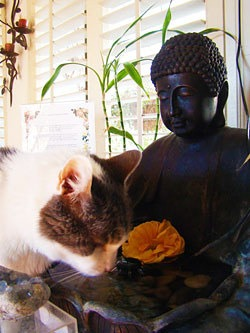 Drinking water at Buddha
